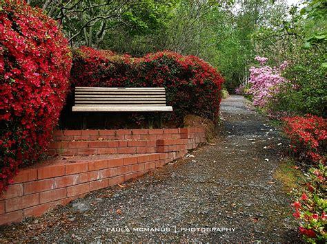 mt lofty botanic garden rhododendron gully mt lofty botanic gardens adelaide