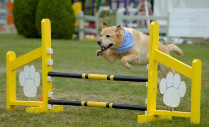 agility course for dogs be nimble will travel