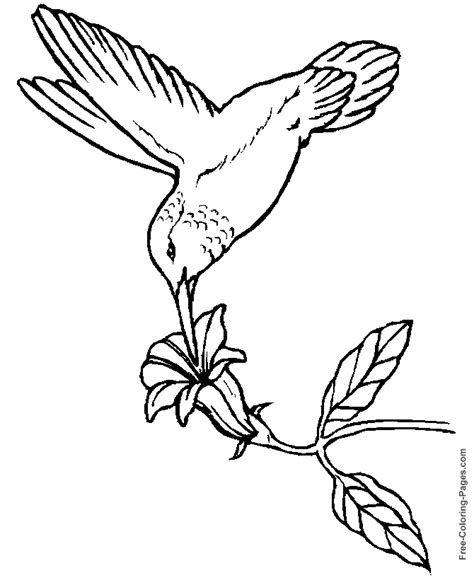 Printable Coloring Pages Of Birds Hummingbird 01 Bird Coloring Pages Free