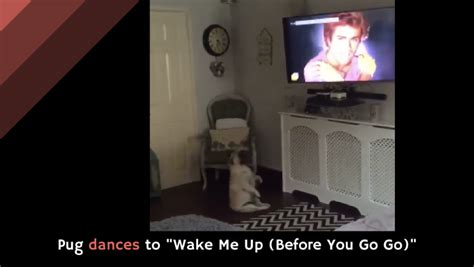 pug to wham pug dances to quot me up before you go go quot alltop viral