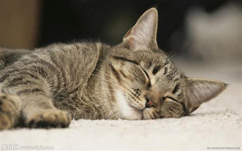 Sleeper Cat 小花猫摄影图 家禽家畜 生物世界 摄影图库 昵图网nipic