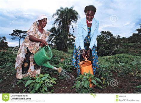 Ugandan Women Work In Vegetable Production Editorial Stock