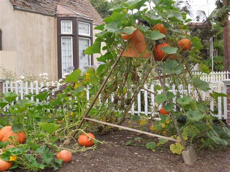Growing Pumpkins On A Trellis 7 fresh home decor ideas via california and dwell on design