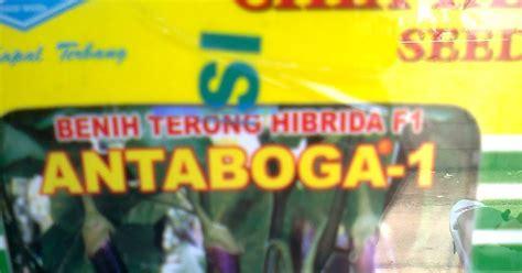 Benih Terong Cap Kapal Terbang jual benih sayuran jual bibit sayuran jual benih terong