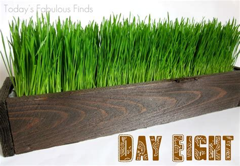 Wheat Grass Planters by Create A Rustic Wood Planter Grow Your Own Wheat Grass