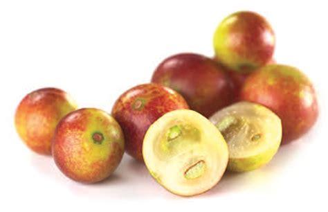 d fruit trading organic camu camu powder cheap camu camu powder uk