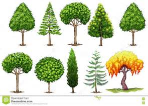 types of trees different types of trees pictures to pin on pinterest pinsdaddy
