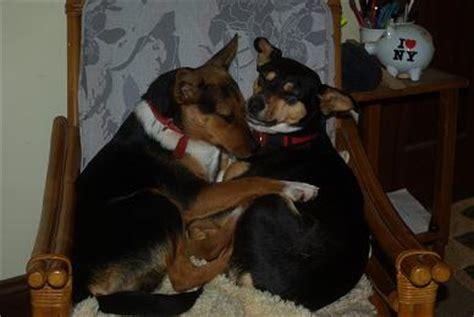 grand mal seizure in dogs epilepsy grand mal seizures