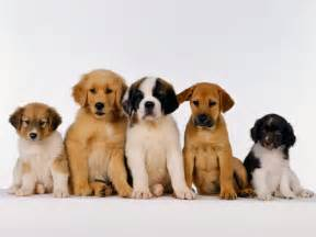 Free Puppies Free Dogs Free Puppies Find Free Dogs