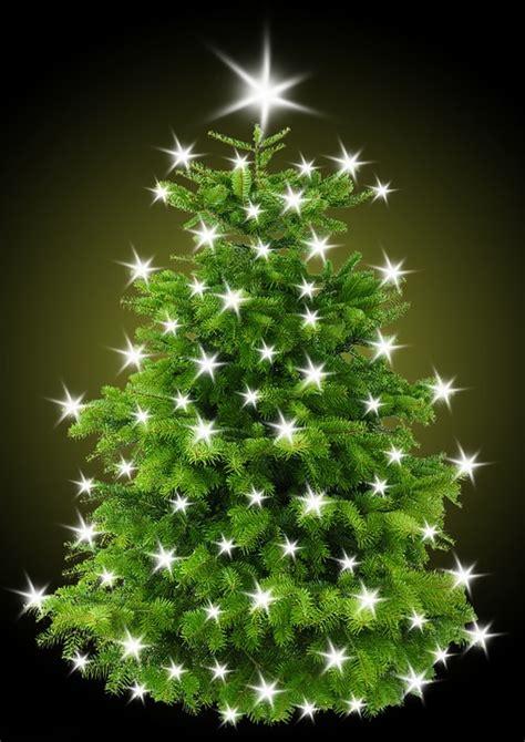 weihnachtsbaum bilder kostenlos kostenlose illustration weihnachtsbaum tannenbaum
