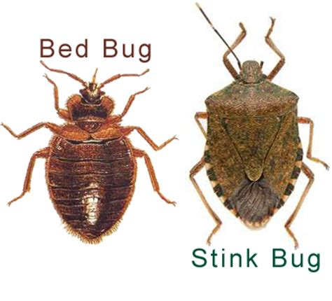 Bed Bugs Smell by Bc Housing Losing Bed Bug Battle Bed Bug Mutts