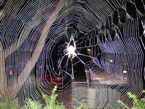 Garden Spider Folklore Images