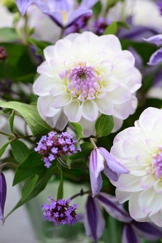 Garden And Gun Dahlias 578 Best Images About Flowers Dahlia On