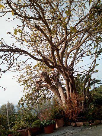 hotel giardino delle finale ligure il giardino foto di agriturismo la selva finale ligure