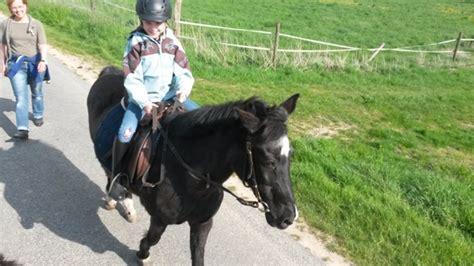 wann ist ein pferd alt hilfe mein pferd wird alt
