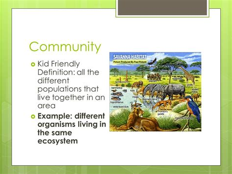 biography definition kid friendly science ecology review terms ppt video online download