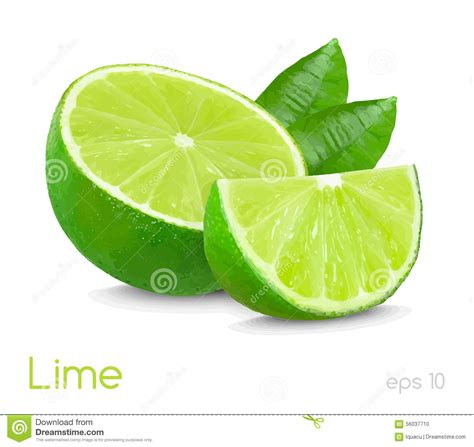 lime silhouette lime illustration stock illustration illustration of