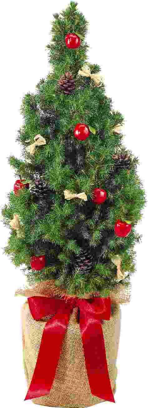 B Umchen Im Topf 3971 by Werbegeschenke Weihnachten F 252 R Kunden G 252 Nstig