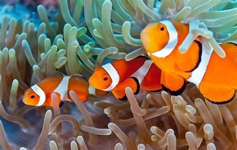 Makanan Ikan Hias Nemo animasi ikan badut nemo bisa ganti house of
