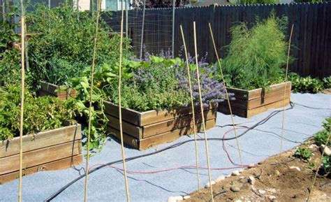 Treated Pine Vegetable Garden Raised Beds With Pressure Treated Trend Bloguez