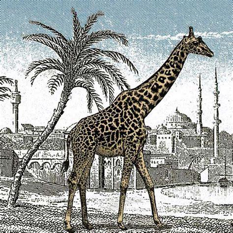 imagenes ocultas con respuesta acertijo encuentra la jirafa acertijos y mas cosas