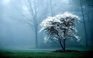 white tree fog mist forest hd wallpapers lovely desktop background images widescreen jpg white