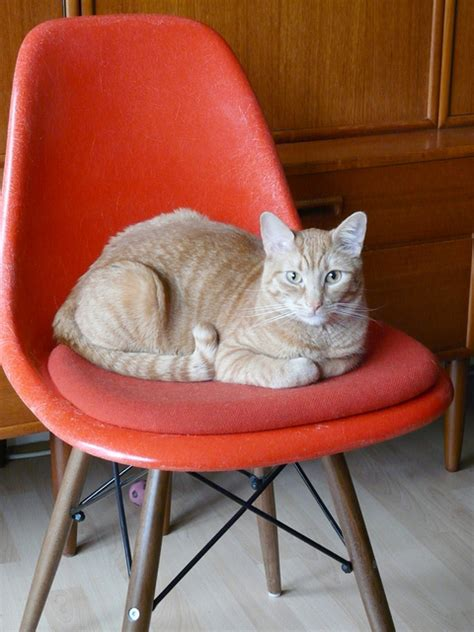 Cat On The Chair by 30 Cute Cats That Love The Eames Chairs