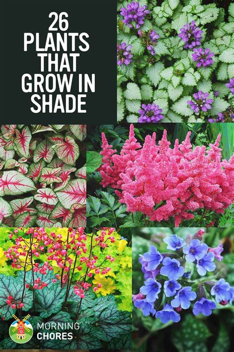 25 gorgeous shade tolerant plants that will bring your shaded garden areas to life plants