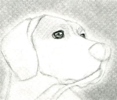 imagenes a lapiz para dibujar de animales c 243 mo aprender a dibujar a l 225 piz paso a paso la gu 237 a m 225 s