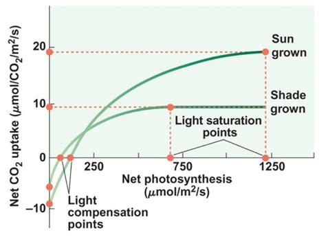 Light Compensation Point biology 281 gt ostling donald zak gt flashcards gt lect 5 6 studyblue