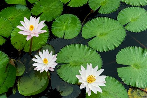 aquatic plants and flowers proflowers blog