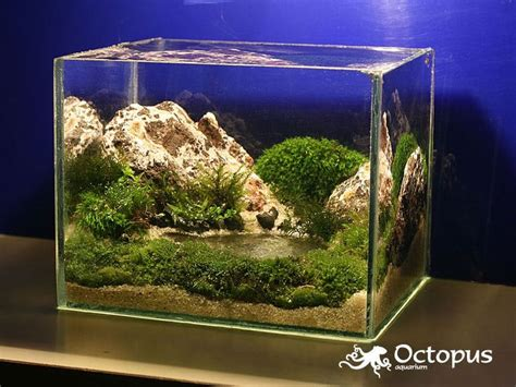 betta aquascape lake aquascape planted tanks pinterest