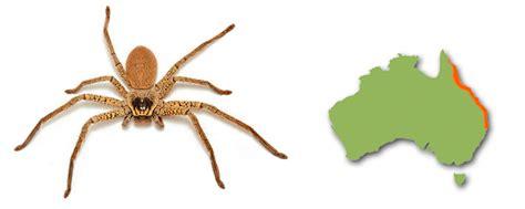 huntsman spiders minibeast wildlife
