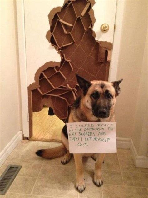 lock cat in bathroom 22 all new and hilarious dog shaming photos