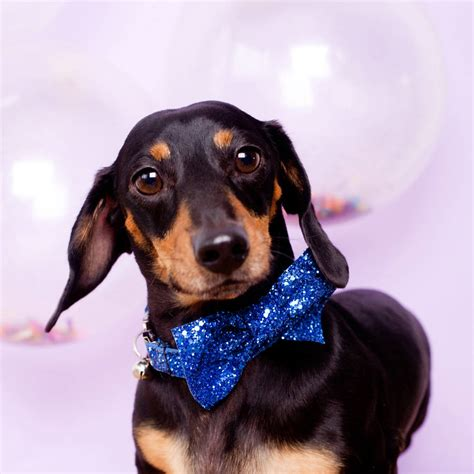 glitter party pet bow tie  pup tart handmade