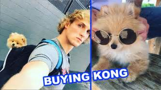 logan paul puppy logan paul buying kongdasavage i just bought a puppy not clickbait