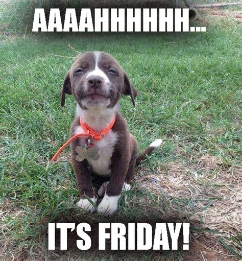 Dog Friday Meme - aaaahhhh it s friday funny dog meme desktop backgrounds