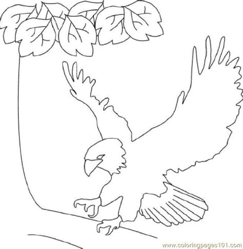 coloring sheet of eagle bald eagle coloring page free eagle coloring pages