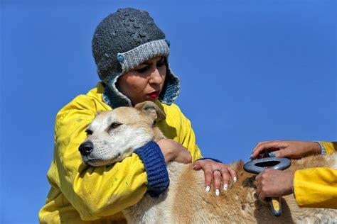 Find In Iran Stray Dogs Find A Home In Iran The Portland Press Herald Maine Sunday Telegram