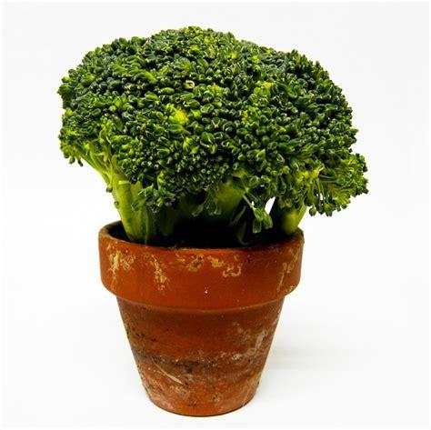 Vegie Green Pot free photo broccoli vegetable green free image on