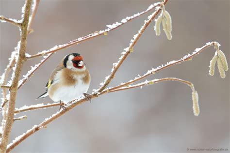 wann wird es wieder warm wann wird es endlich wieder winter forum f 252 r naturfotografen