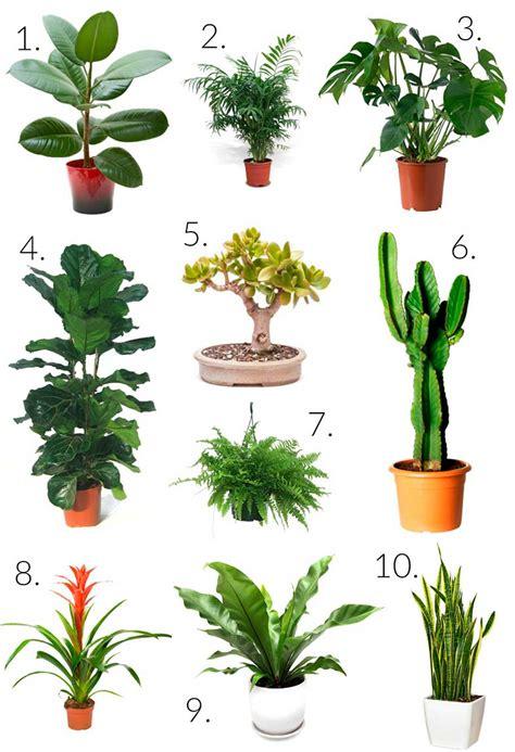 decoracion de plantas inspiraciones para decorar con plantas de interior
