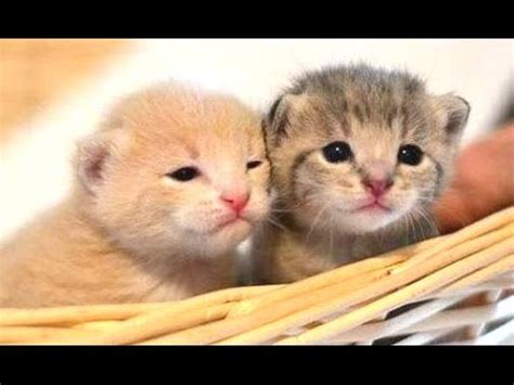 cute kittens compilation   youtube