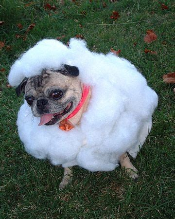 pictures of pugs dressed up best 25 pugs dressed up ideas on pug costume pug costumes and