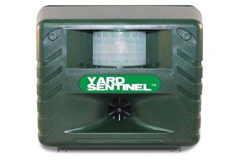 getting rid of raccoons in backyard getting rid of raccoons in backyard best raccoon repellents and electronic repellers