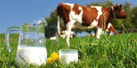 Haidar Milk Kambing Segar Dan Murah 5 manfaat minum segar bagi kesehatan merdeka
