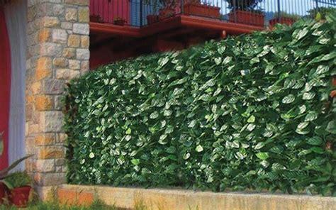 recinzioni da giardino in pvc 6 idee per recinzioni da giardino meravigliose foto