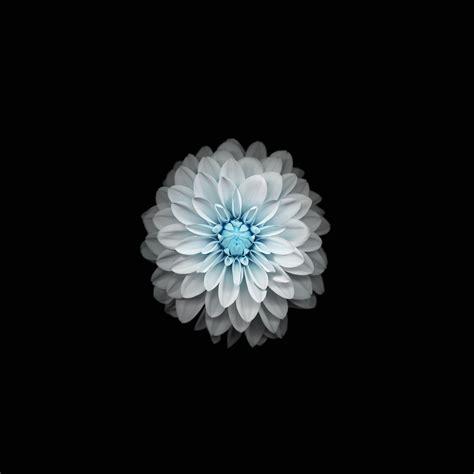 ac wallpaper apple iphone  ios flower blue wallpaper