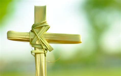 Palm Search Palm Sunday Images Search