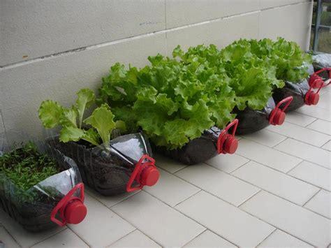 pet craft soda bottles on bottle gardening ideas